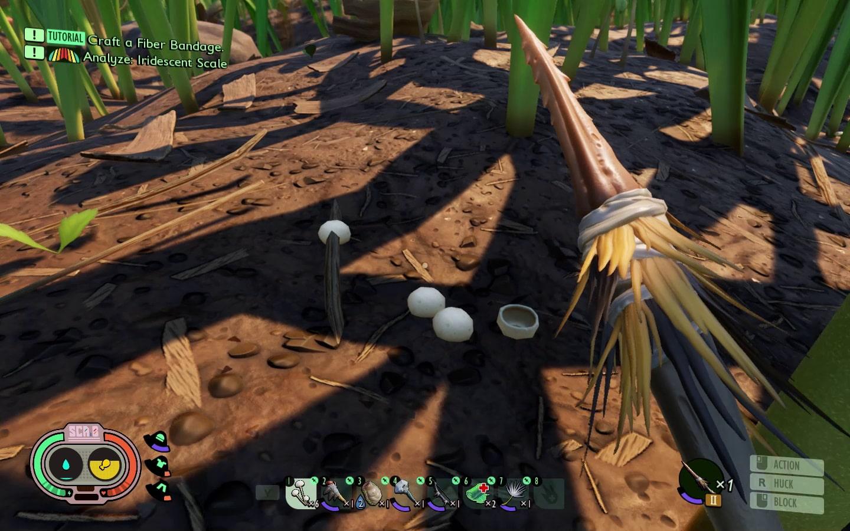 Mushroom Stacks at ground